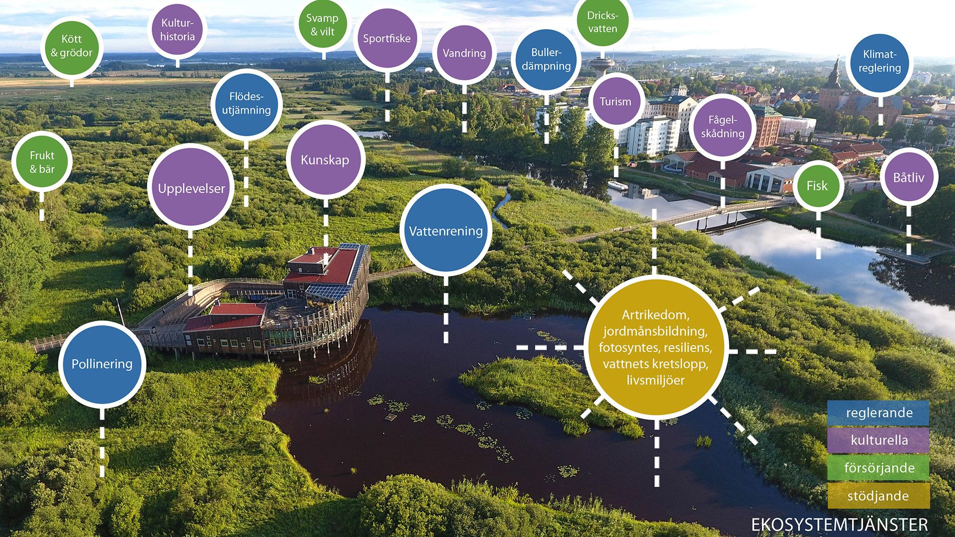 Ekosystemtjänster i Vattenriket