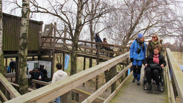 Fågeltornet Vid Pulken är Tillgängligt Med Rullstol. Foto: Åsa Pearce