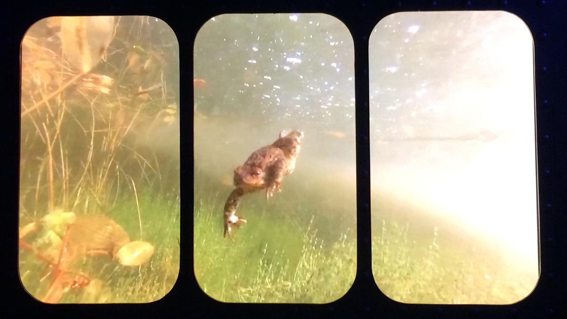 Opteryx tar dig med över och under ytan i Vattenriket