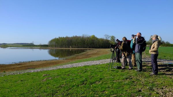Ny Våtmark Och Fågelskådare Vid Hamilton Hill. Foto: Åsa Pearce