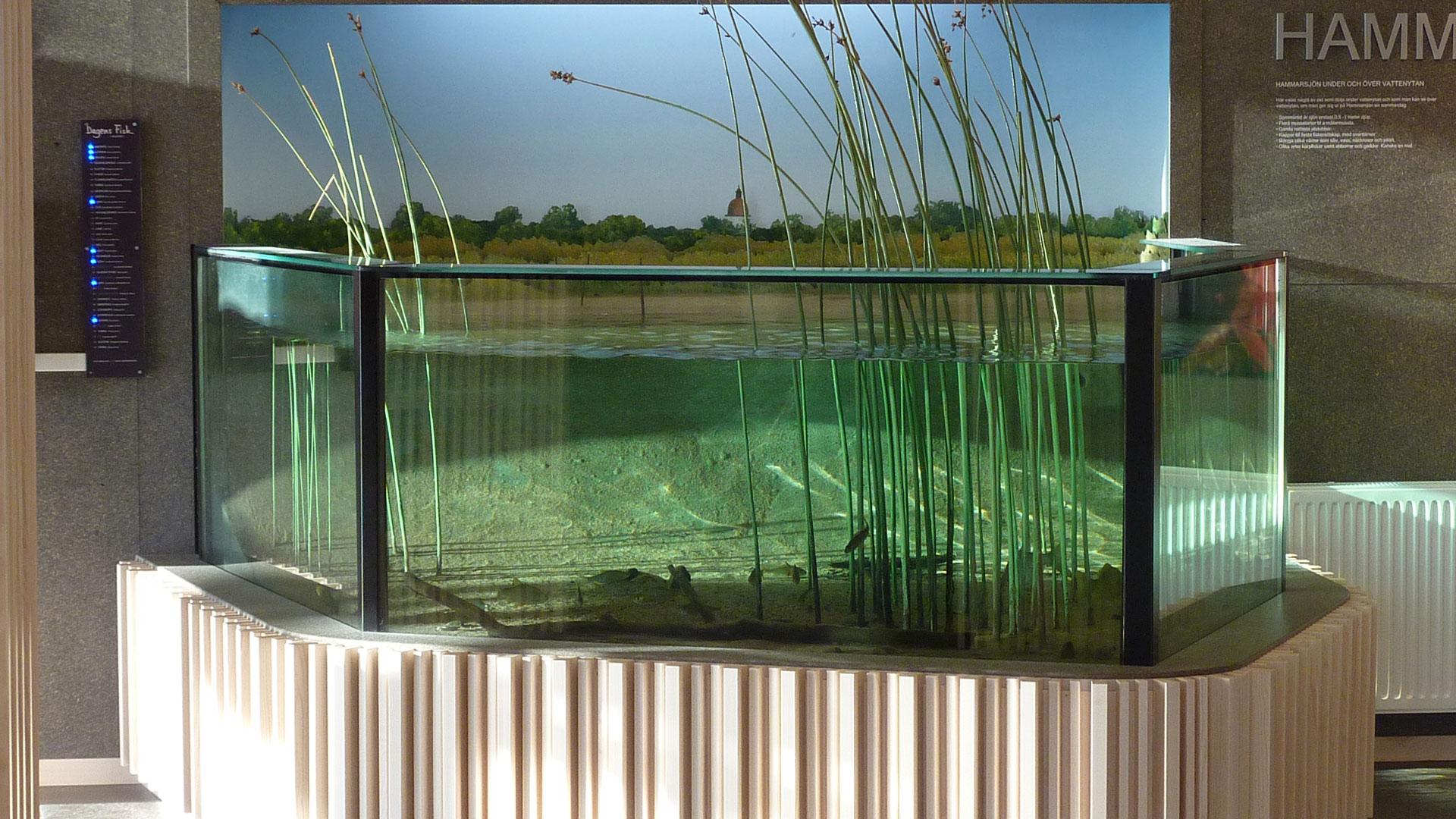 Akvariet på naturum Vattenriket