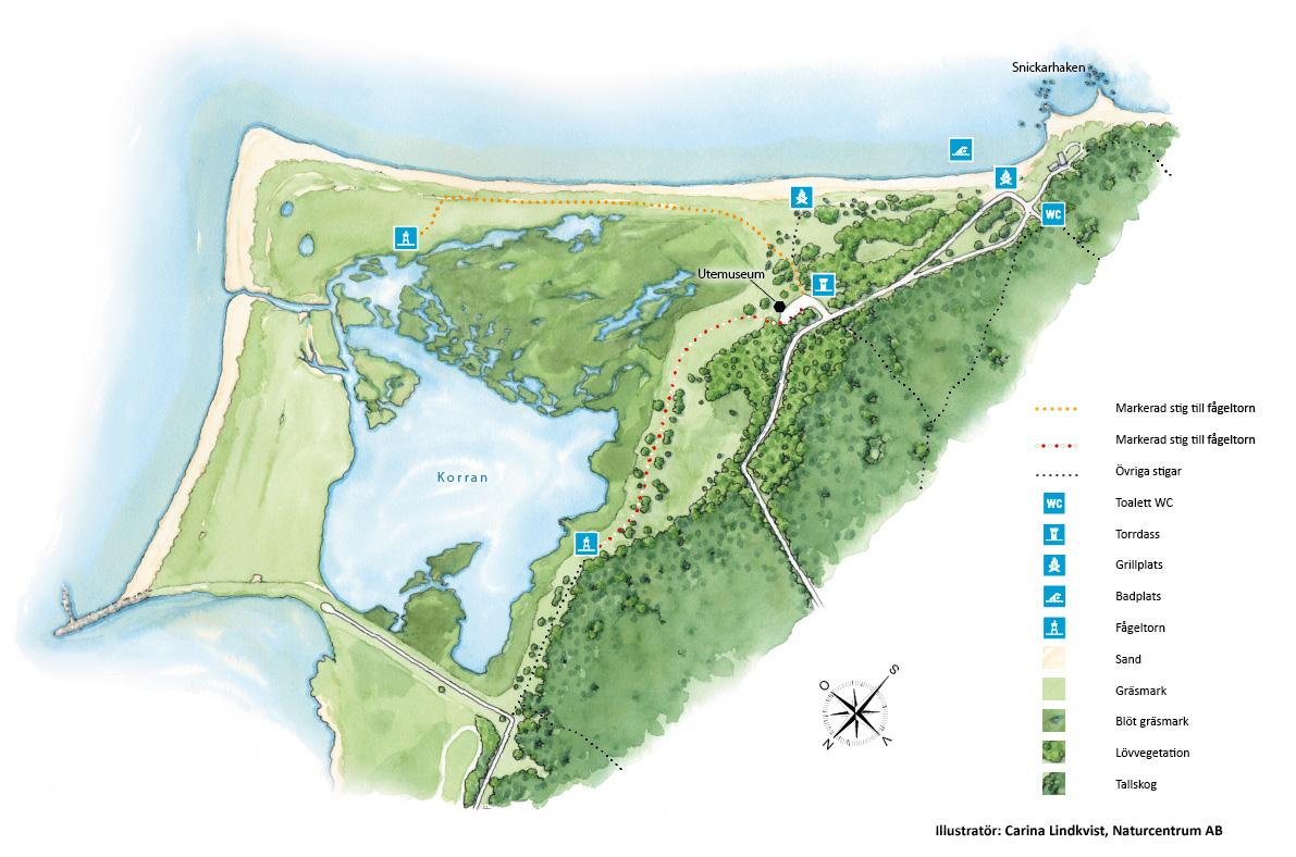 Karta över Äspets lagun och strandområde. Illustration: Carina Lindkvist, Naturcentrum AB