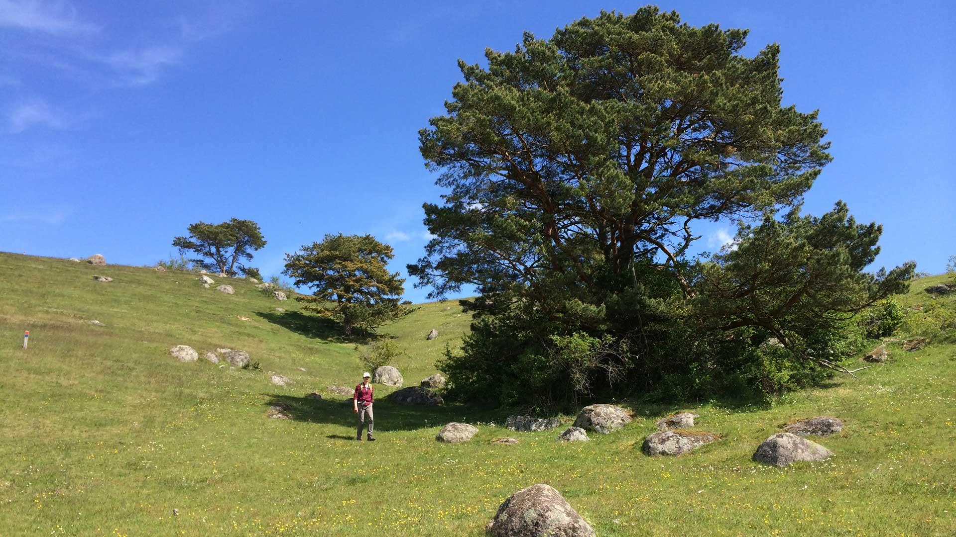 Degeberga backar bjuder på fin vandring. Foto: Karin Magntorn