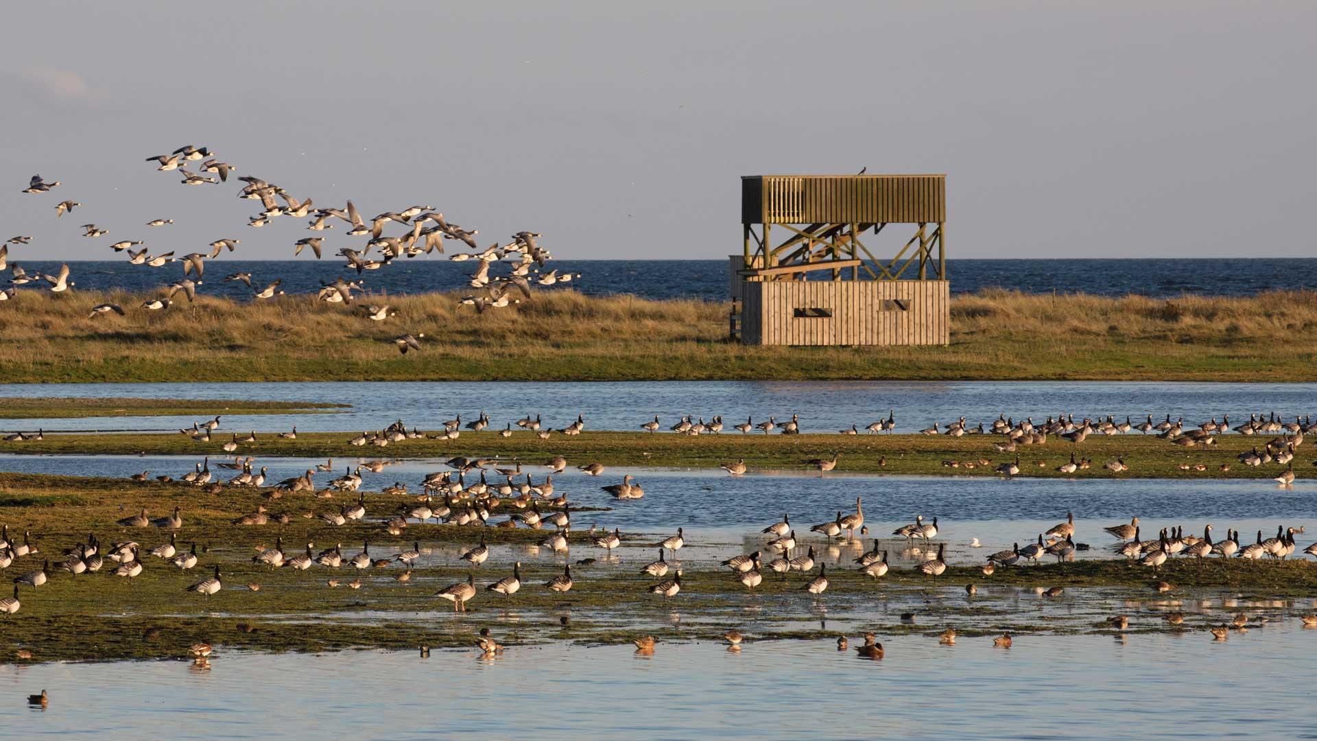 Skåda vadarfåglar från Äspets fågeltorn. Foto: Patrik Olofsson/N