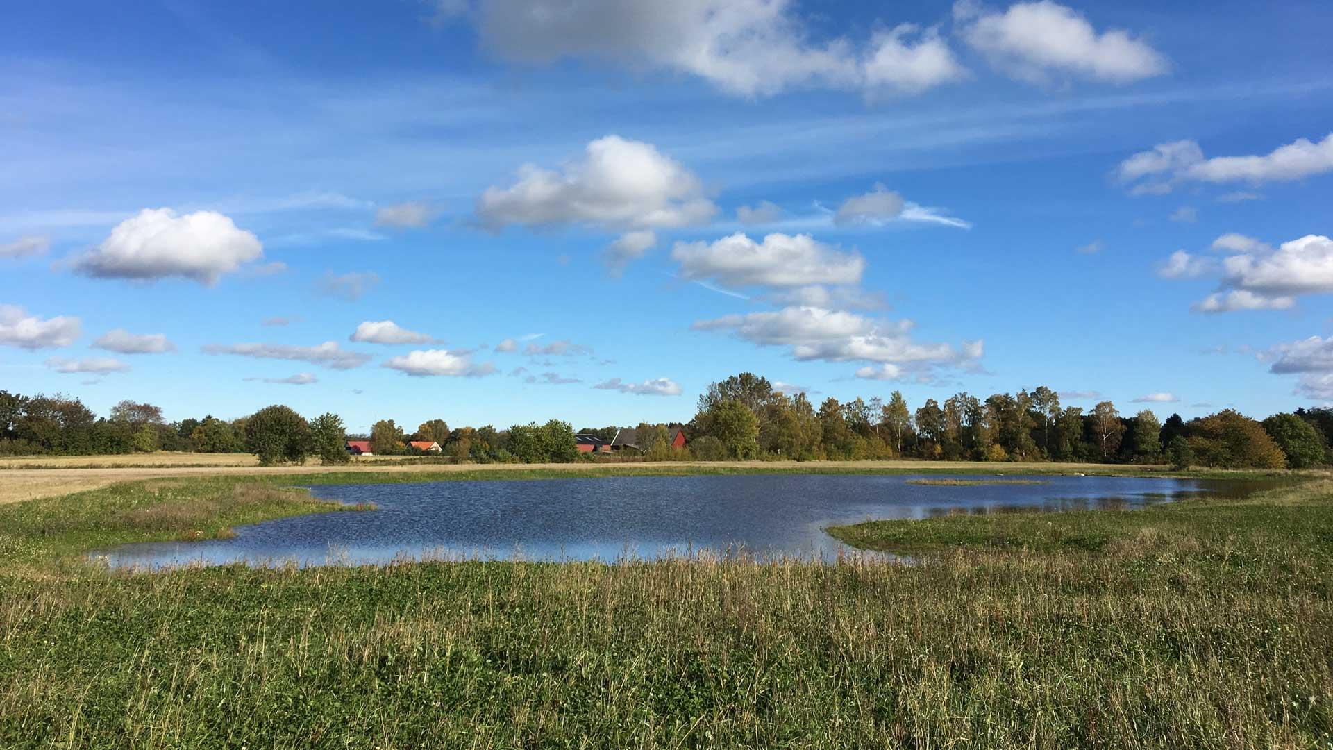 Anläggning av våtmarker förbättrar vattenkvalitén i vattendrag, sjöar och hav.