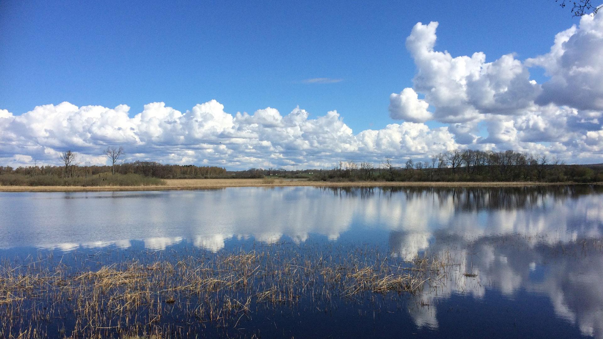 Arslövssjön sett från fågeltornet på Norra Lingenäset. Foto Karin Magntorn