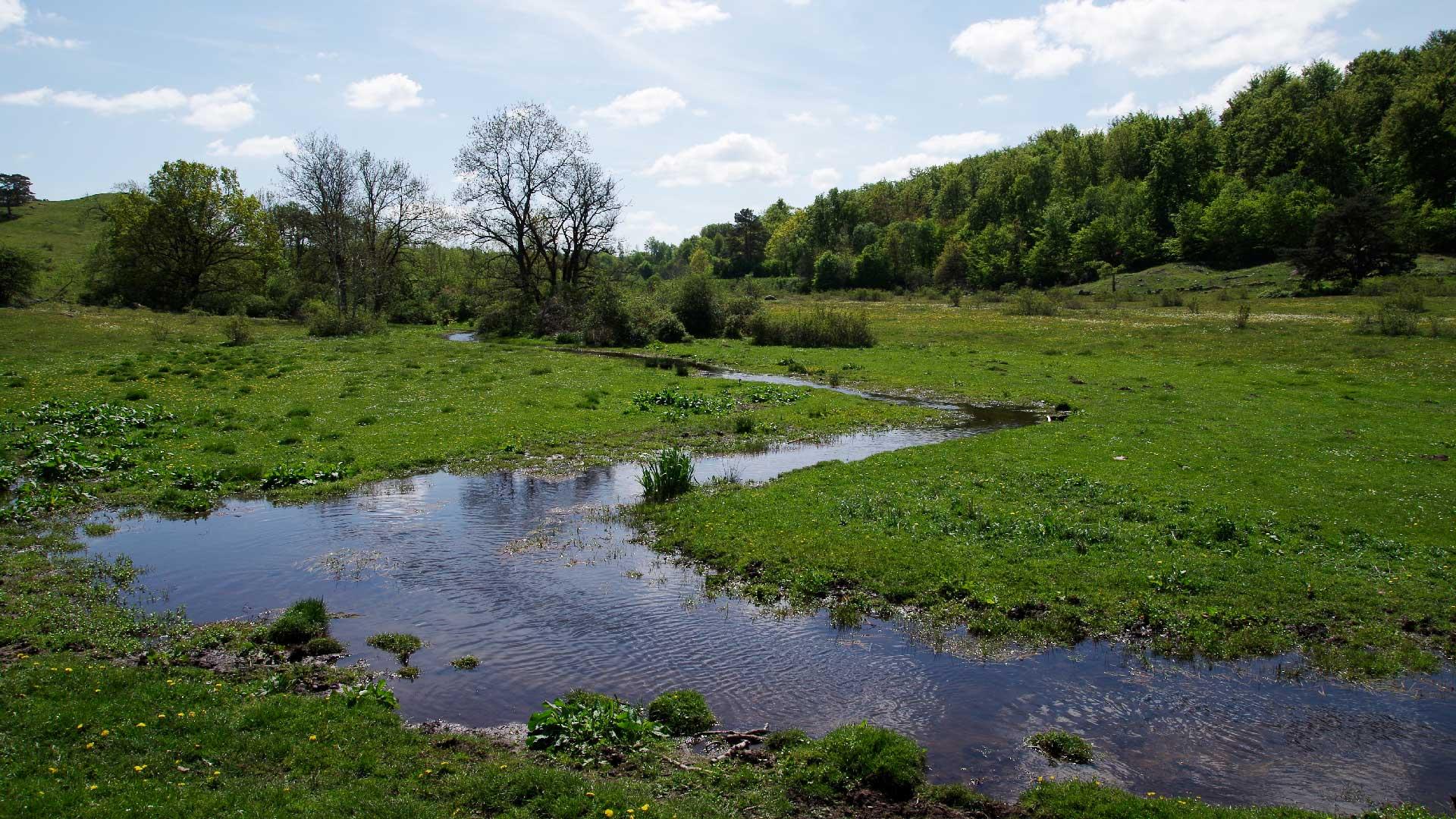 Bäcken som rinner längs Degeberga backar är ett biflöde till Forsakarsbäcken. Foto: Victor Englund
