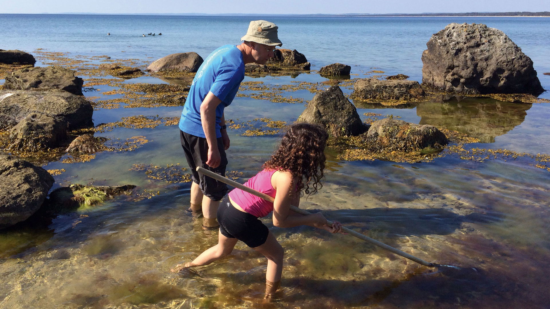 Håva bland sandrkor och sågtång i havet. Foto Karin Magntorn