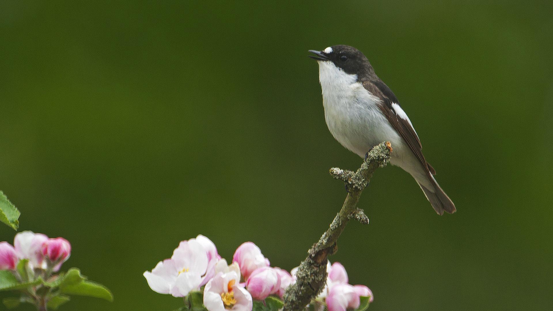 Fåglar hjälper till att minska antalet skadeinsekter i våra odlingar. Foto: Patrik Olofsson/N