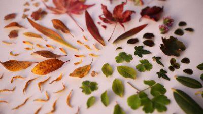 Gör blomstermandala tillsammans med Hanna Wendelbo. Foto Hanna Wendelbo