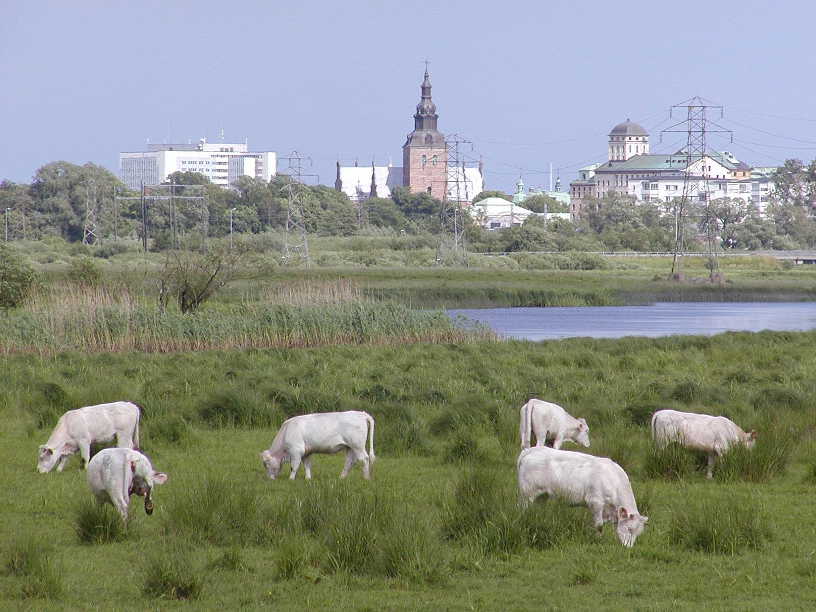 Isternäset blir naturreservat 2001