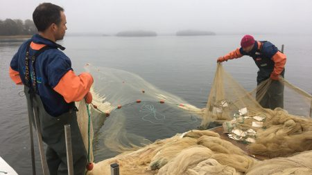 Reduktionsfiske