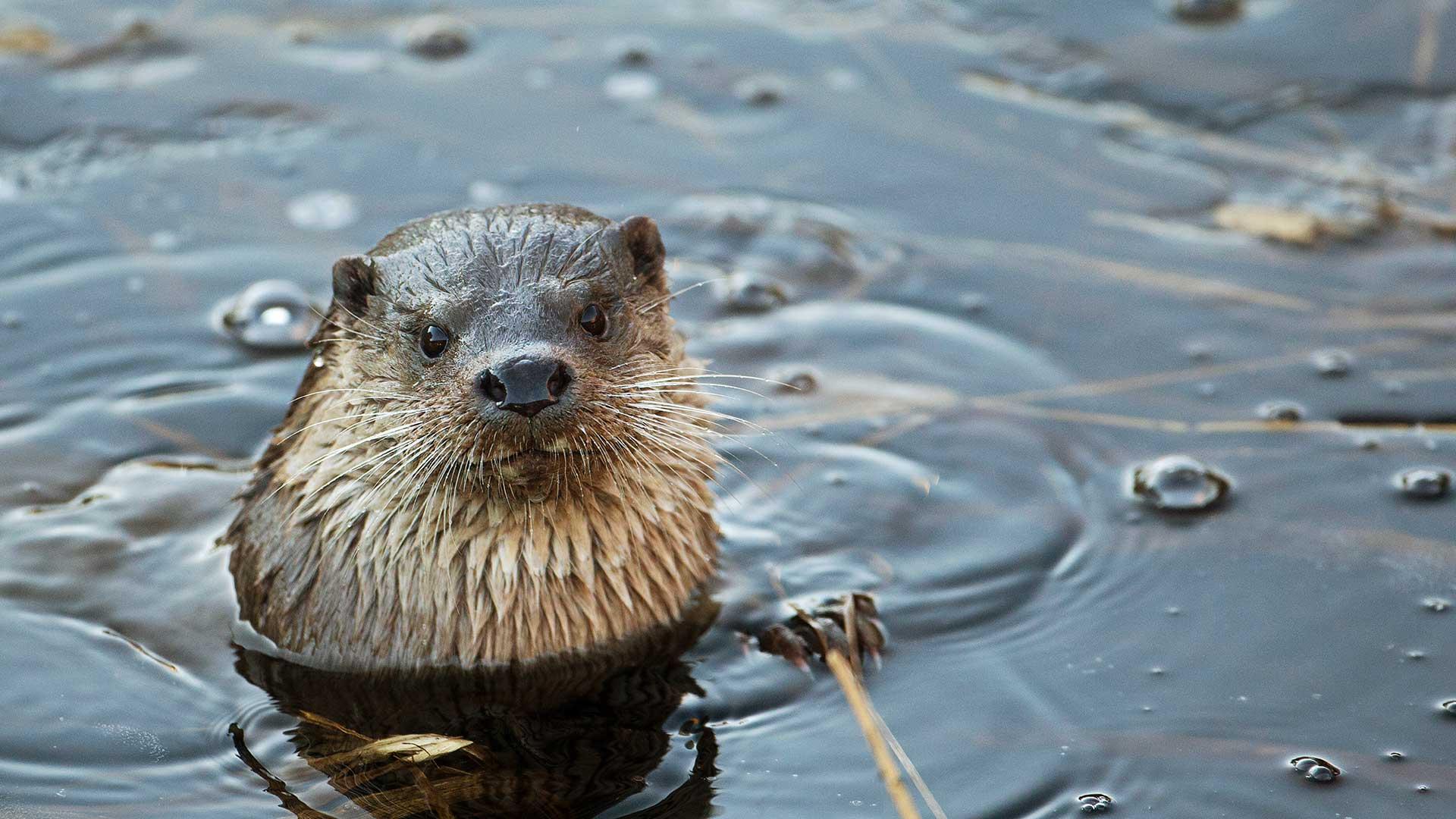 Utter i naturumsjön. Foto: Patrik Olofsson/N