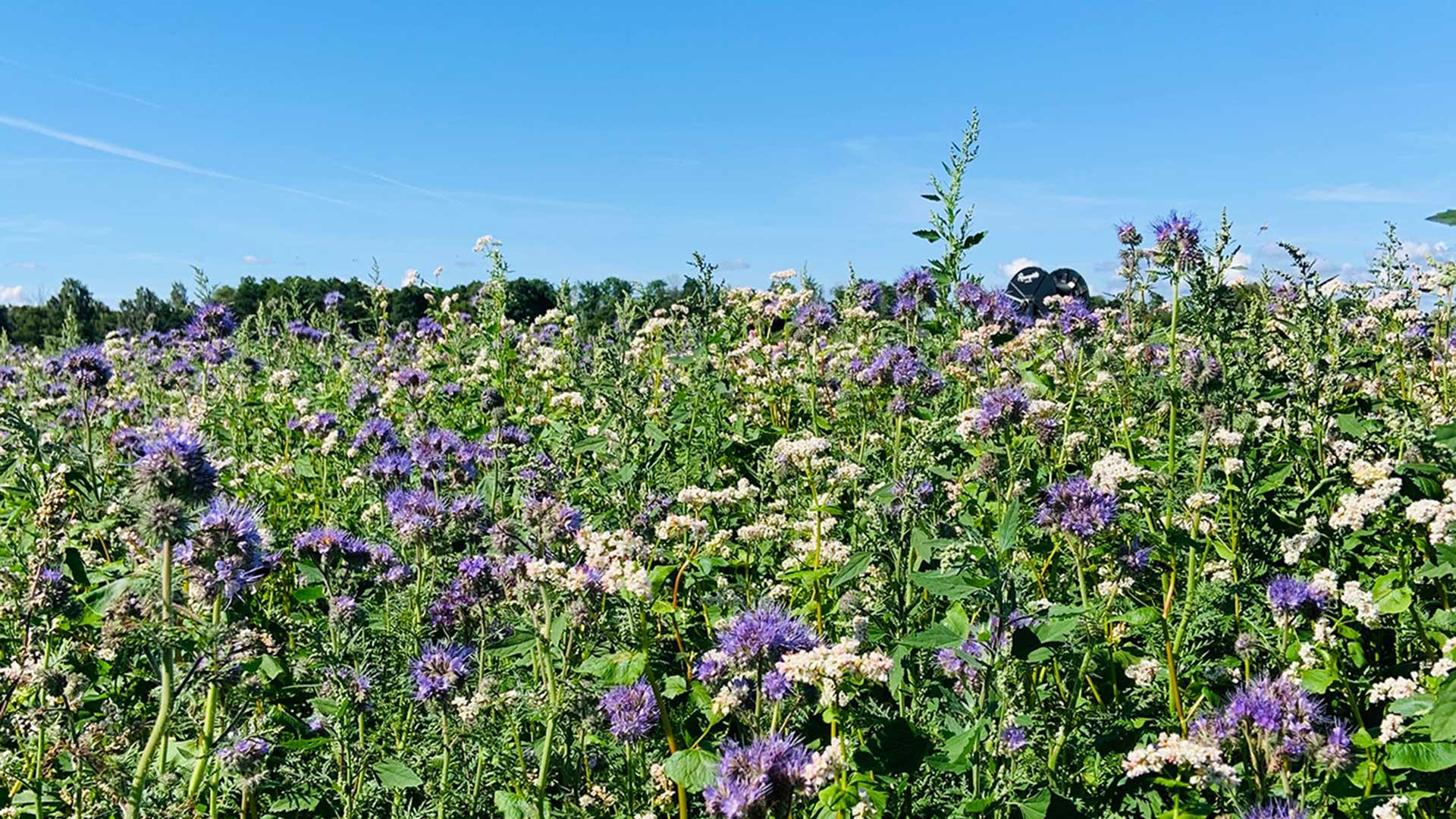 Blommande Fält I Projektet Hela Skåne Blommar