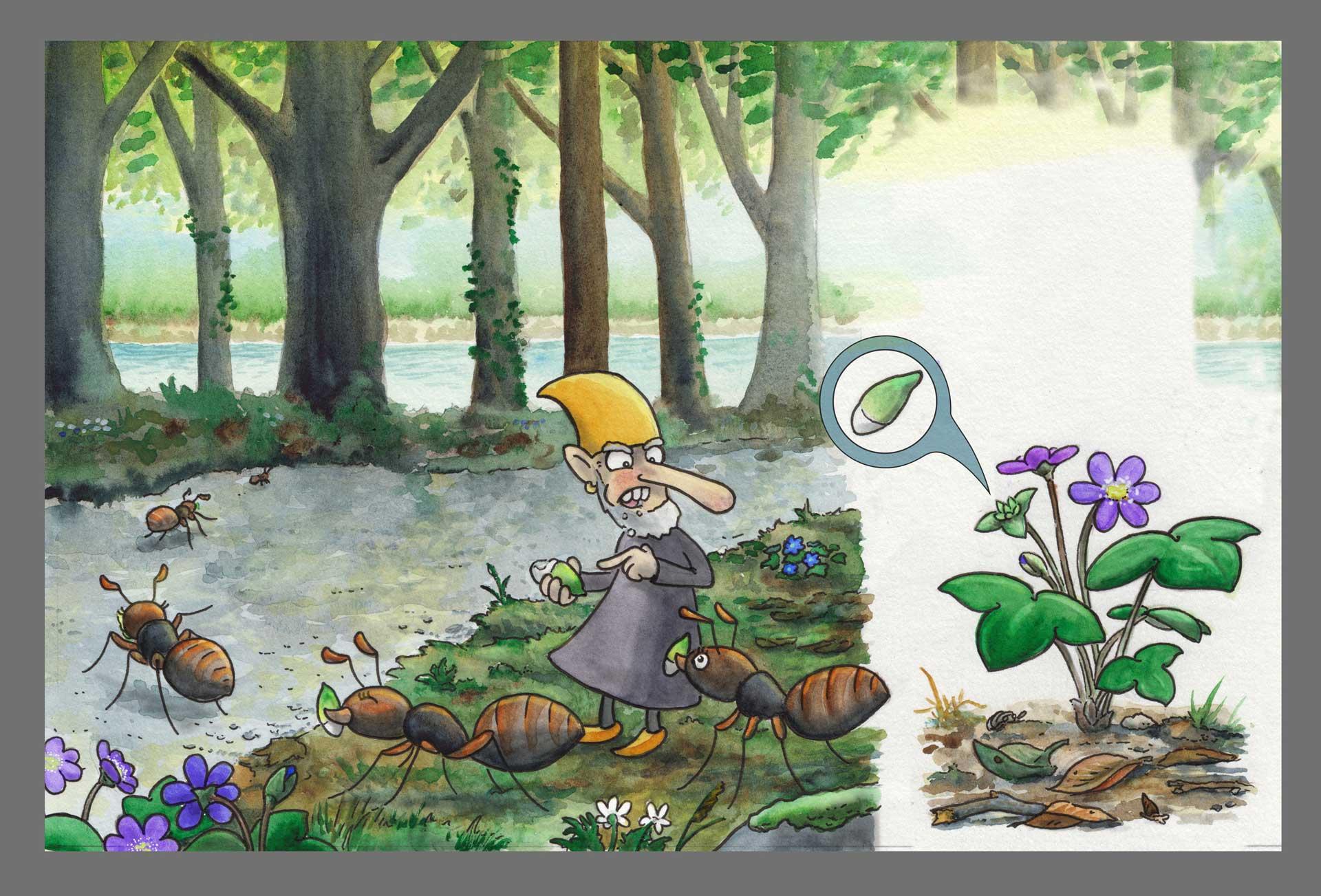 En arg vätte bland myror och blåsippor. Illustration Erik Kohlström