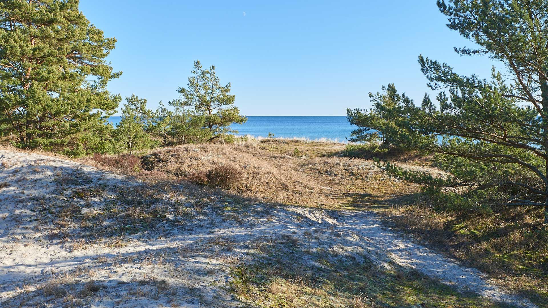 Sanddyner, tallar och hav vid Södra Äspet. Foto Dan Gerell