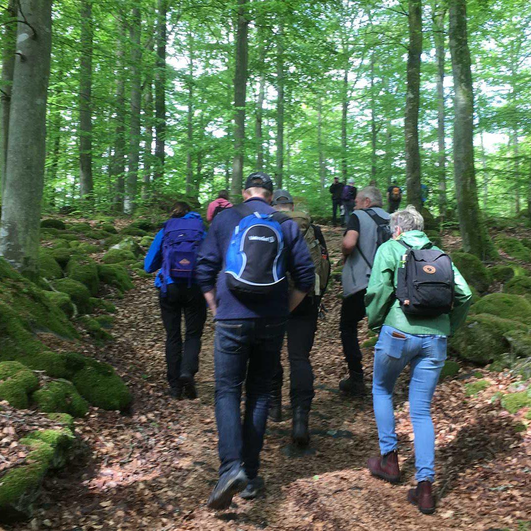 Vandra på Balsberget i nyutslagen bokskog