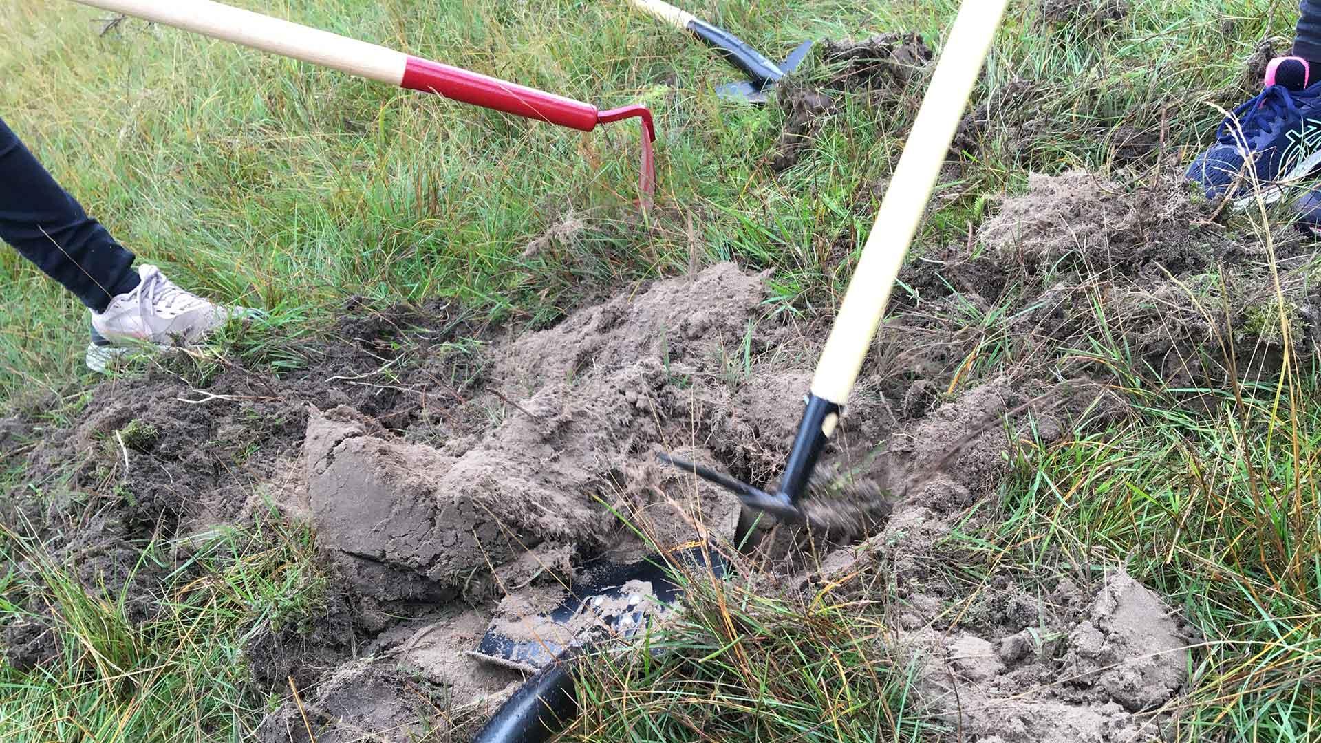 Elever gör praktisk naturvård genom att gräva upp kalkrik sand. Foto Sam Peterson