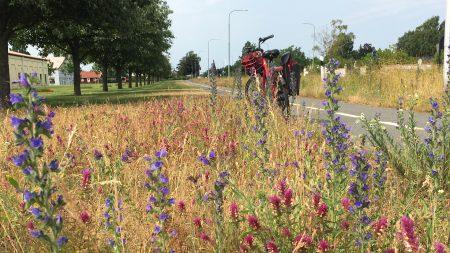 Blommande Cykelväg I Rinkaby