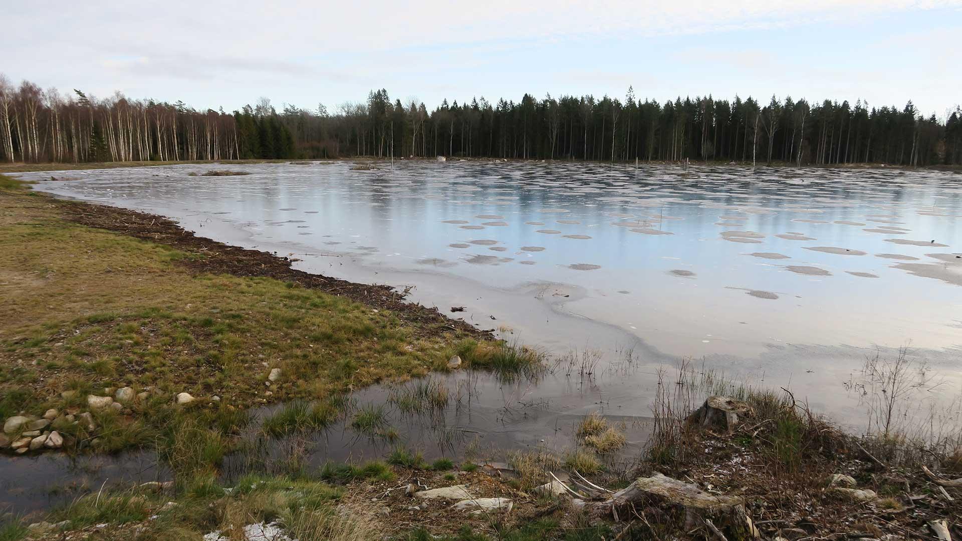 Skogsvåtmark i Hylta. Foto Andreas Jezek