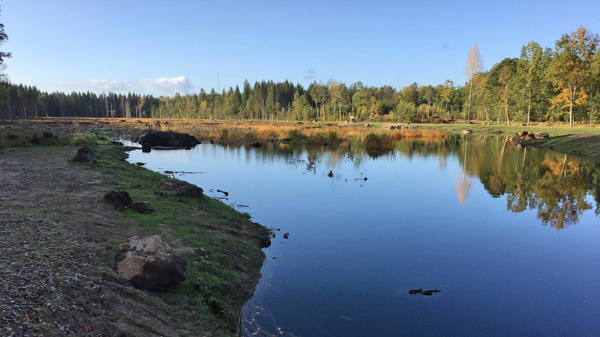 Skogsvåtmark i Skeinge. Foto Andreas Jezek