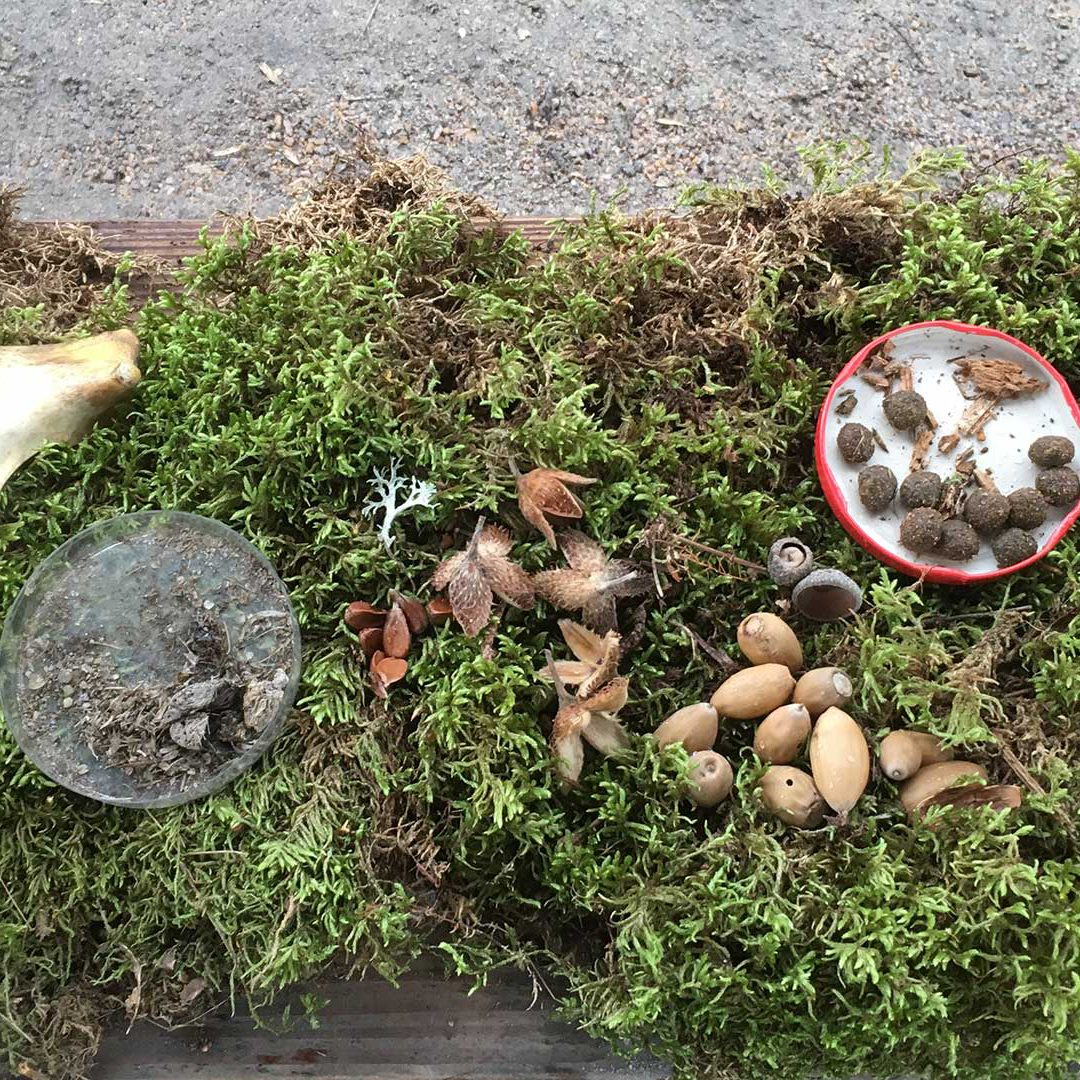 Skelett, spillning och nötter som ligger på en bädd av mossa.